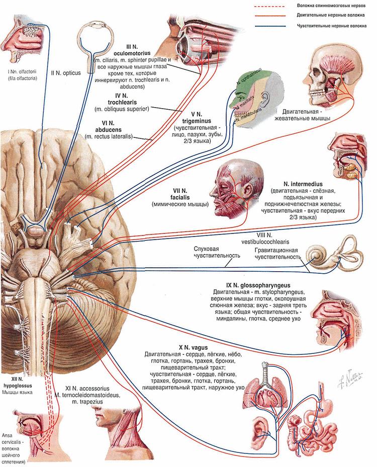 Эритропсия фото